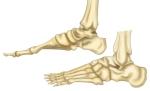 feet-bones
