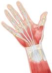 hand-palm